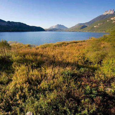 Conservatoire d'espaces naturels de Haute-Savoie - Asters