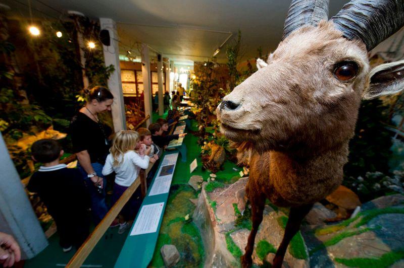 musee-histoire-naturelle-gruffy-3